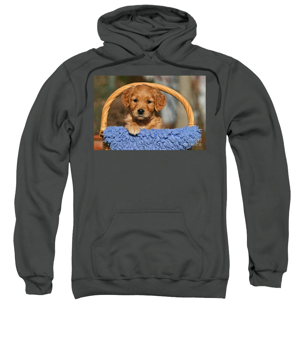 golden Retriever Sweatshirt featuring the photograph Golden Retriever Puppy In A Basket by Dog Photos