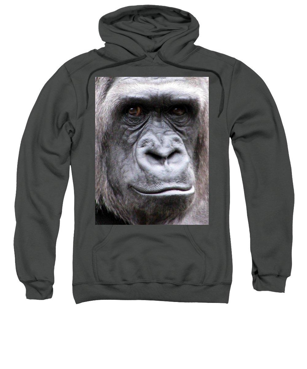 Gorilla Sweatshirt featuring the photograph Gorilla - Jackie by Pamela Critchlow