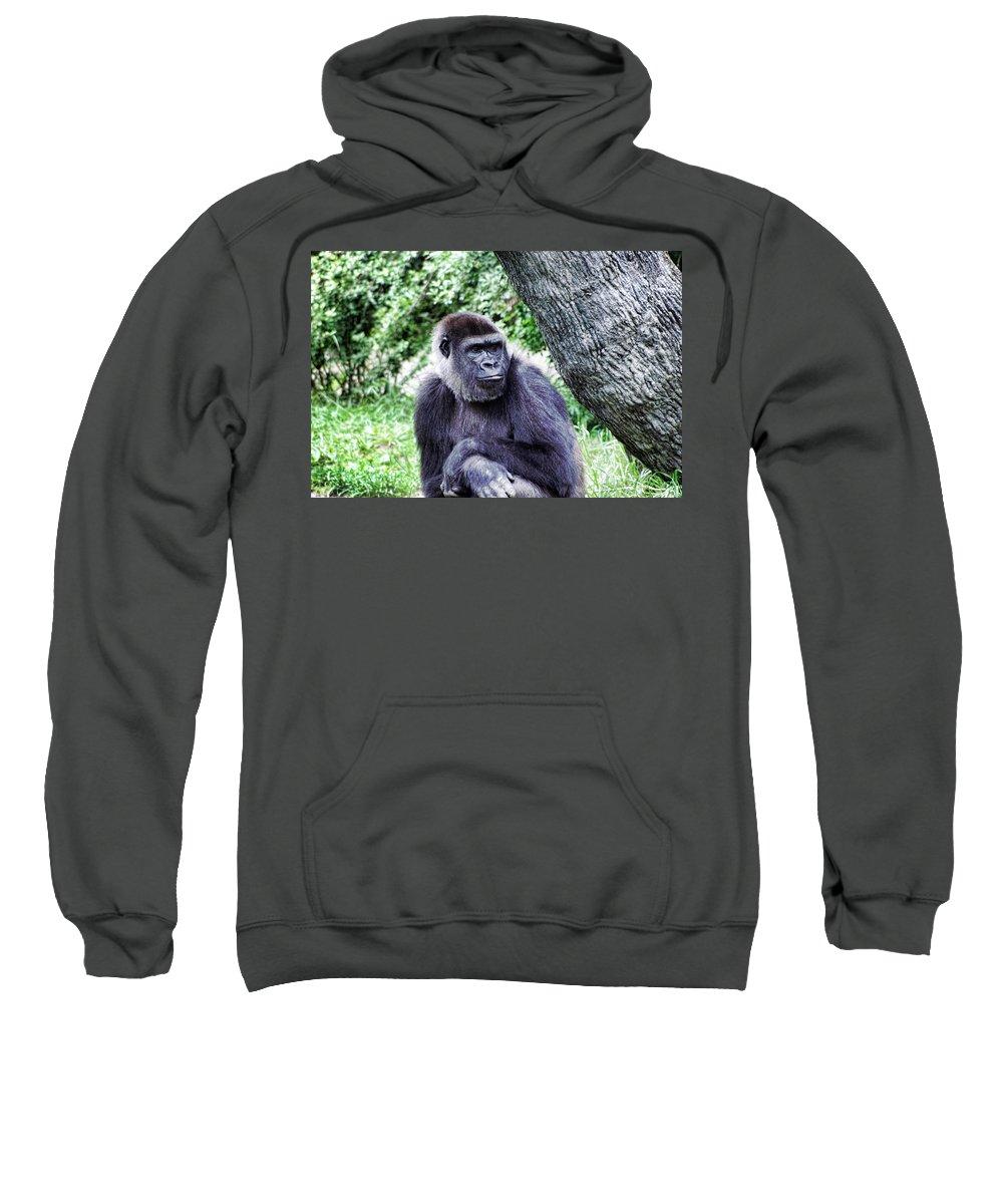 Gorilla Sweatshirt featuring the photograph Gorilla by Sharon Meyer