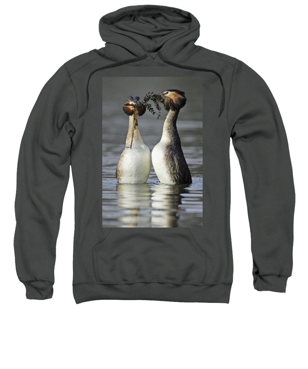 Designs Similar to Great Crested Grebe Courtship