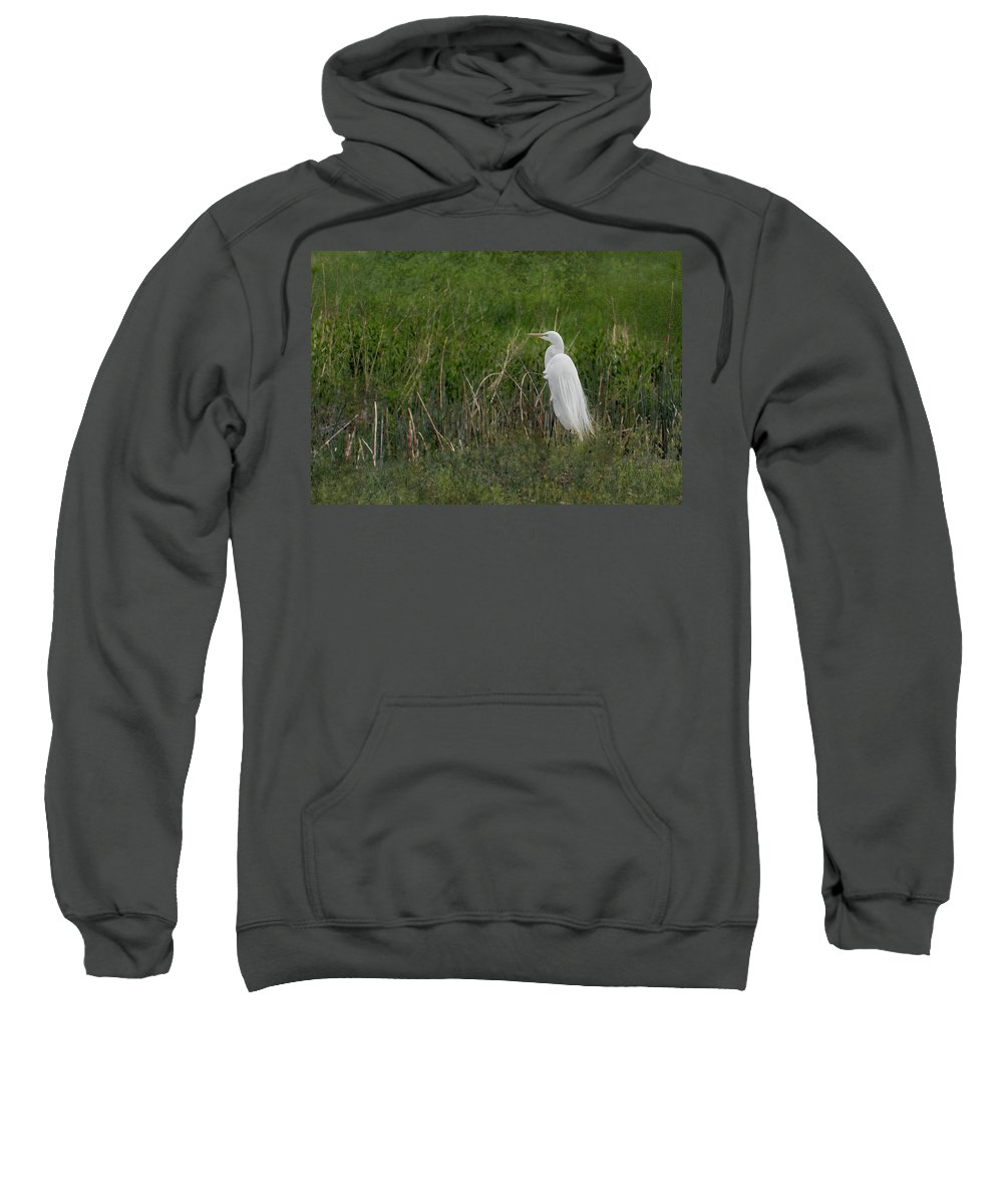 Egrets Sweatshirt featuring the photograph Great Egret by Belinda Greb