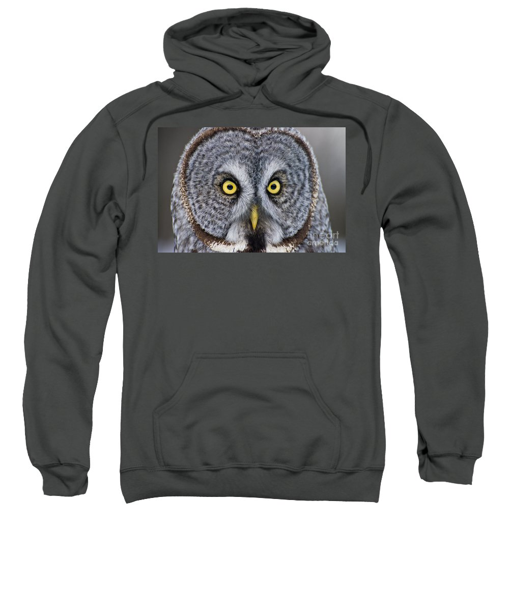 Great Gray Owl Sweatshirt featuring the photograph Great Gray Owl Pictures 680 by World Wildlife Photography