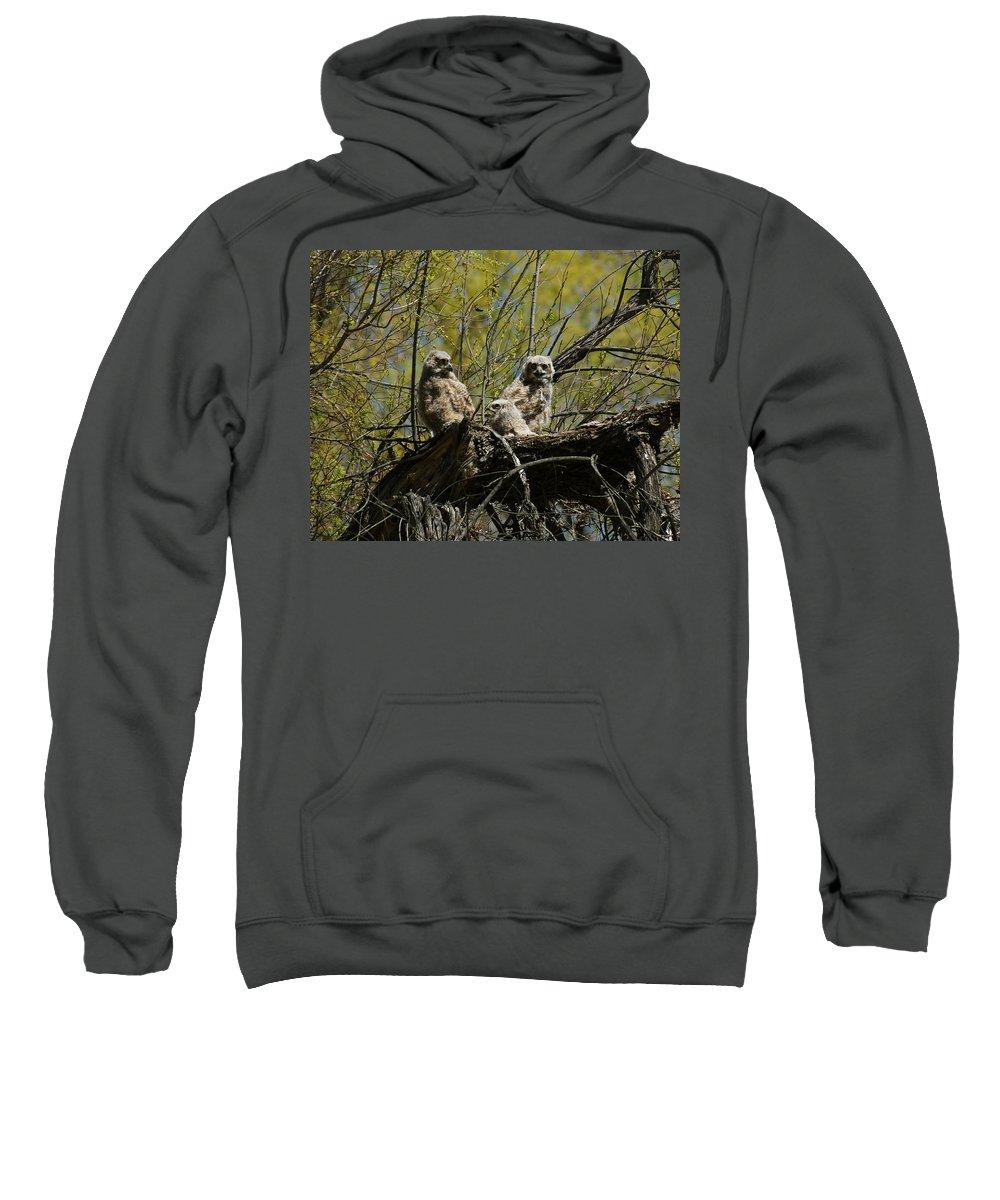 Birds Sweatshirt featuring the photograph Great Horned Owlets 1 by Ernie Echols