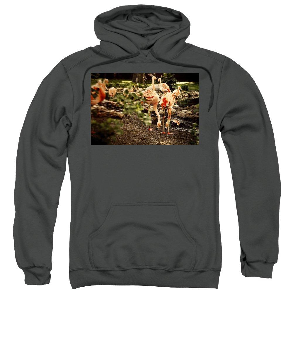 Greater Flamingo Sweatshirt featuring the digital art Greater Flamingo by Diane Dugas