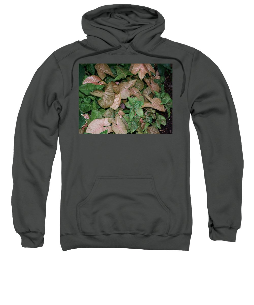Plant Sweatshirt featuring the photograph Green And Brown Leaves by Geoffrey McLean
