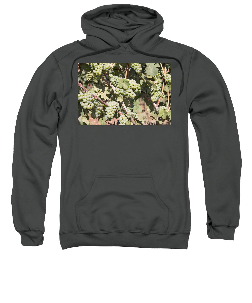 Green Sweatshirt featuring the photograph Green Grapes Growing On Grapevines by Jit Lim