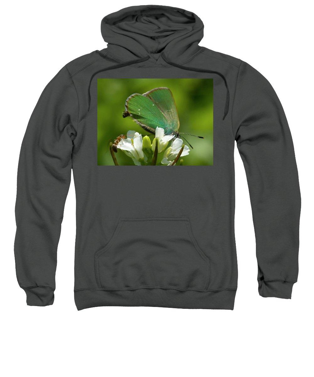 Green Hairstreak Sweatshirt featuring the photograph Green Hairstrek by Cliff Norton
