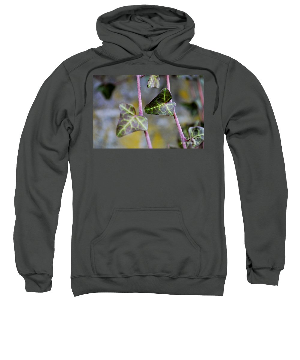 Evergreen Vine Sweatshirt featuring the photograph Green Hearts Beat by Felicia Tica