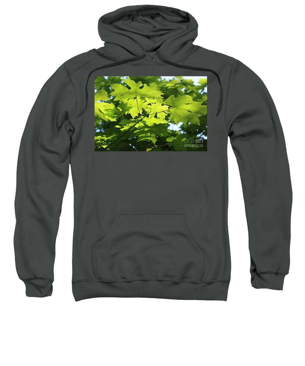 Nature Sweatshirt featuring the photograph Green Leaves Canvas by Carol Groenen