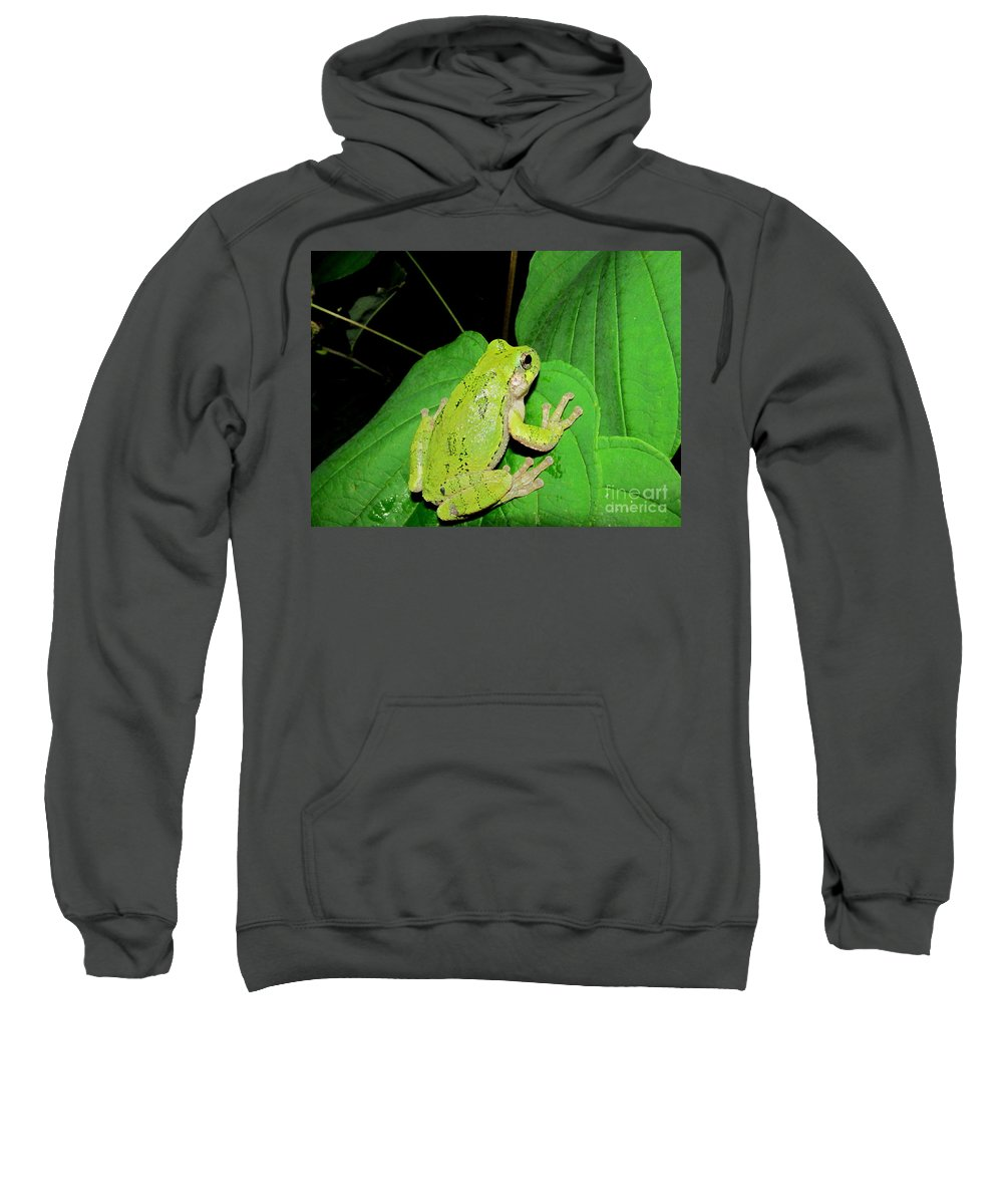 Green Phase Gray Tree Frog North American Amphibians North American Frogs Maryland Forgs Maryland Tree Frogs Appalachian Amphibians Appalachian Tree Frogs Nocturnal Creatures Nocturnal Nature Photography Sweatshirt featuring the photograph Green Tree Frog by Joshua Bales