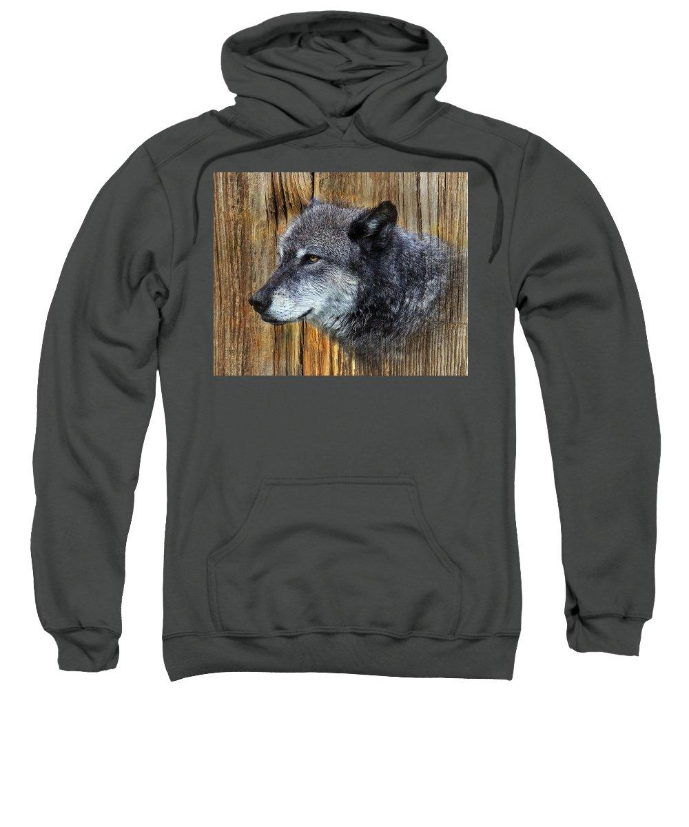 Wolf Art Sweatshirt featuring the photograph Grey Wolf On Wood by Steve McKinzie