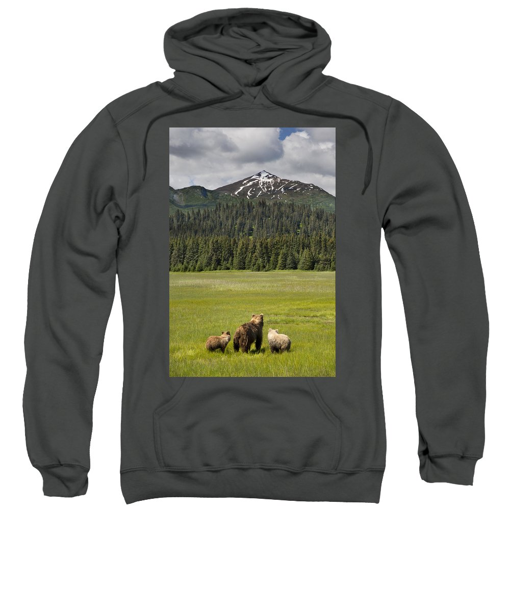 Richard Garvey-williams Sweatshirt featuring the photograph Grizzly Bear Mother And Cubs In Meadow by Richard Garvey-Williams