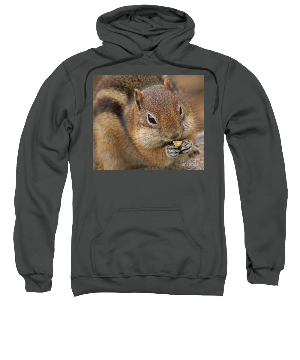 Ground Squirrel Sweatshirt featuring the photograph Ground Squirrel by Heather Coen