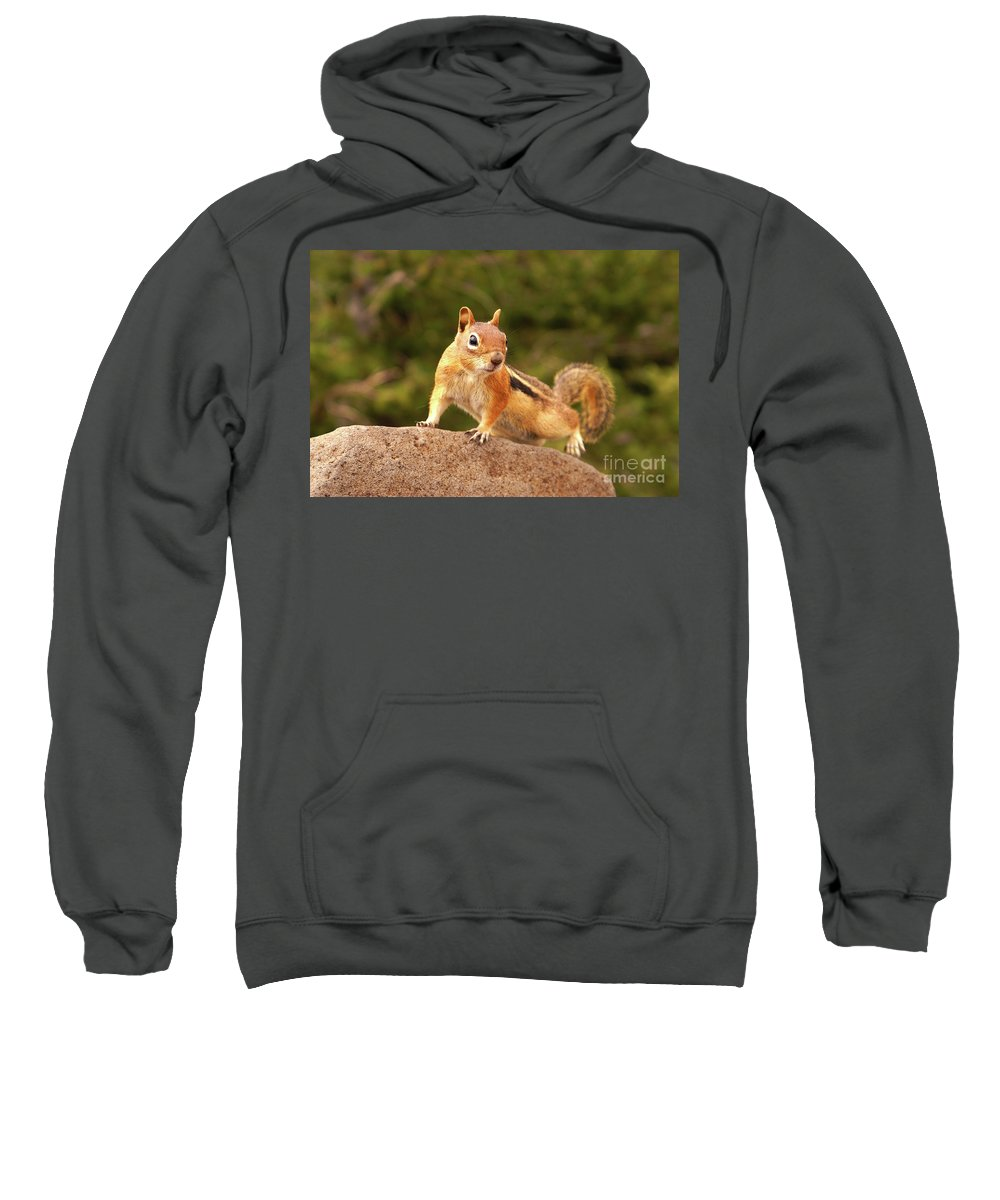 Ground Squirrel Sweatshirt featuring the photograph Ground Squirrel by Kelly Black