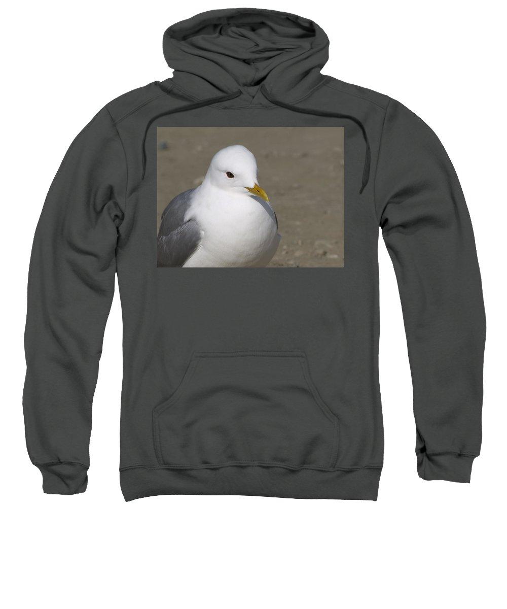Sea Gull Sweatshirt featuring the photograph Gull by Tara Lynn