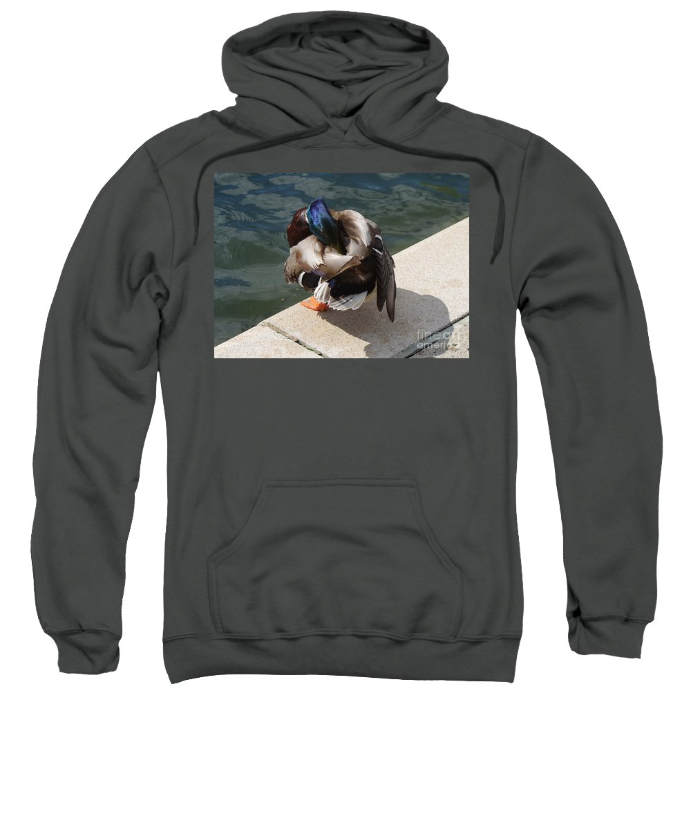 Male Mallard Duck Sweatshirt featuring the photograph Handsome Mallard by Kitrina Arbuckle