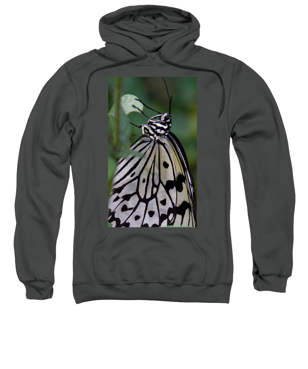 Butterfly Sweatshirt featuring the photograph Hanging On by Natalie Rotman Cote