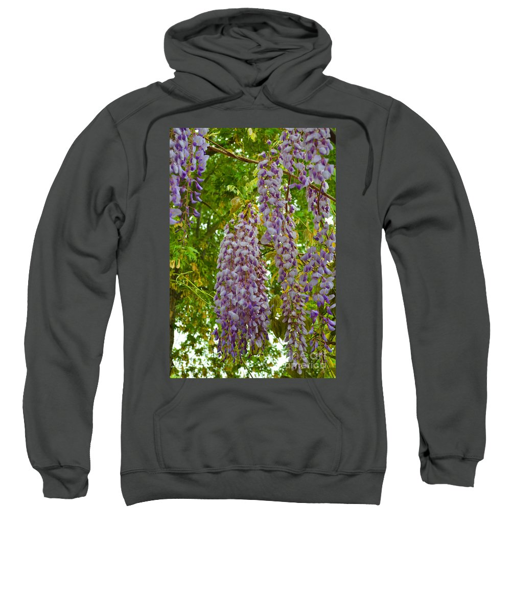 Blossoms Sweatshirt featuring the photograph Hanging Wisteria Blossoms by Alys Caviness-Gober