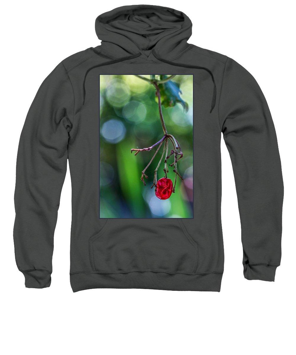 Reno Garden Sweatshirt featuring the digital art Hanin On In Reno by Georgianne Giese