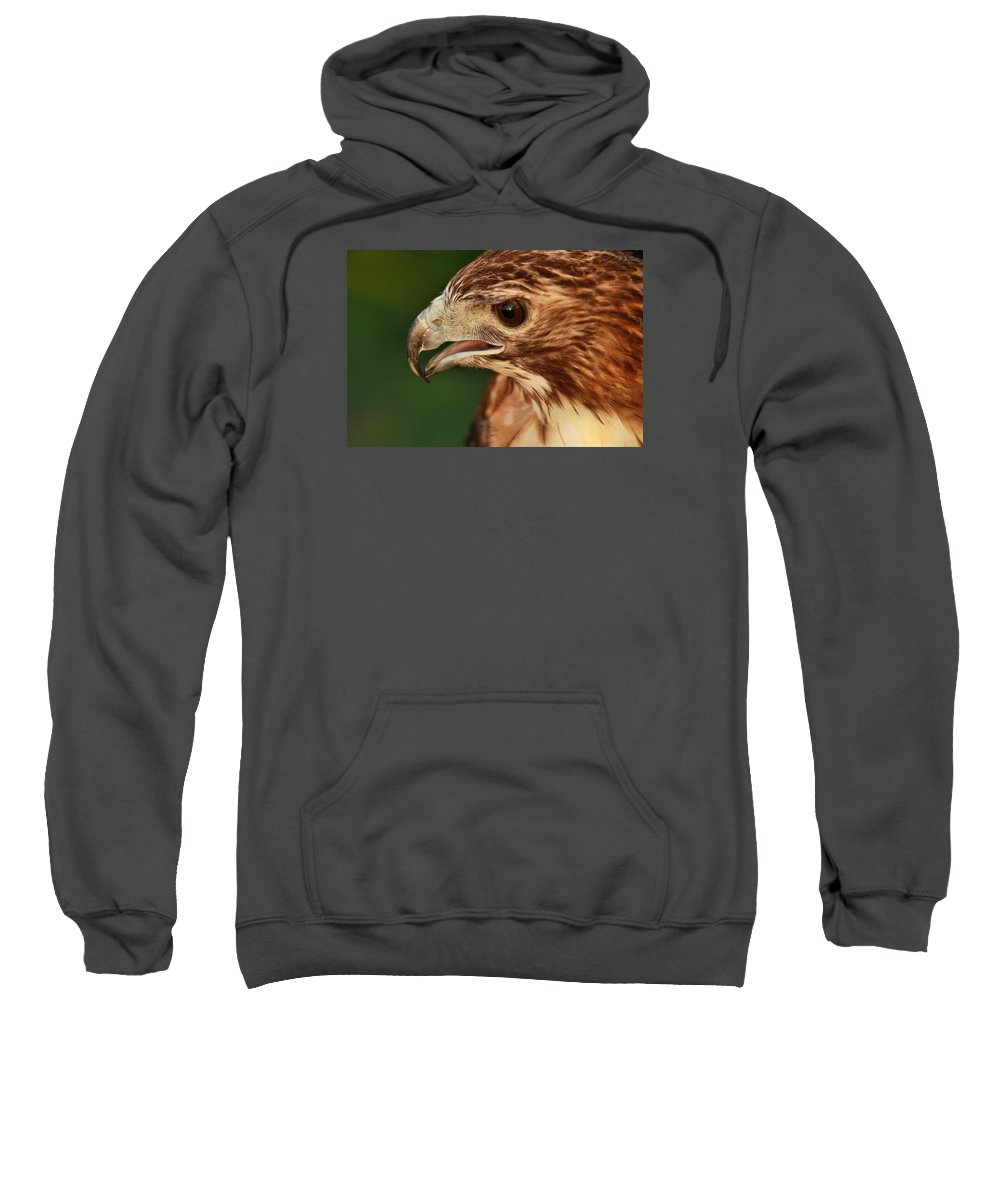 Red Tailed Hawk Portrait Sweatshirt featuring the photograph Hawk Eye by Dan Sproul