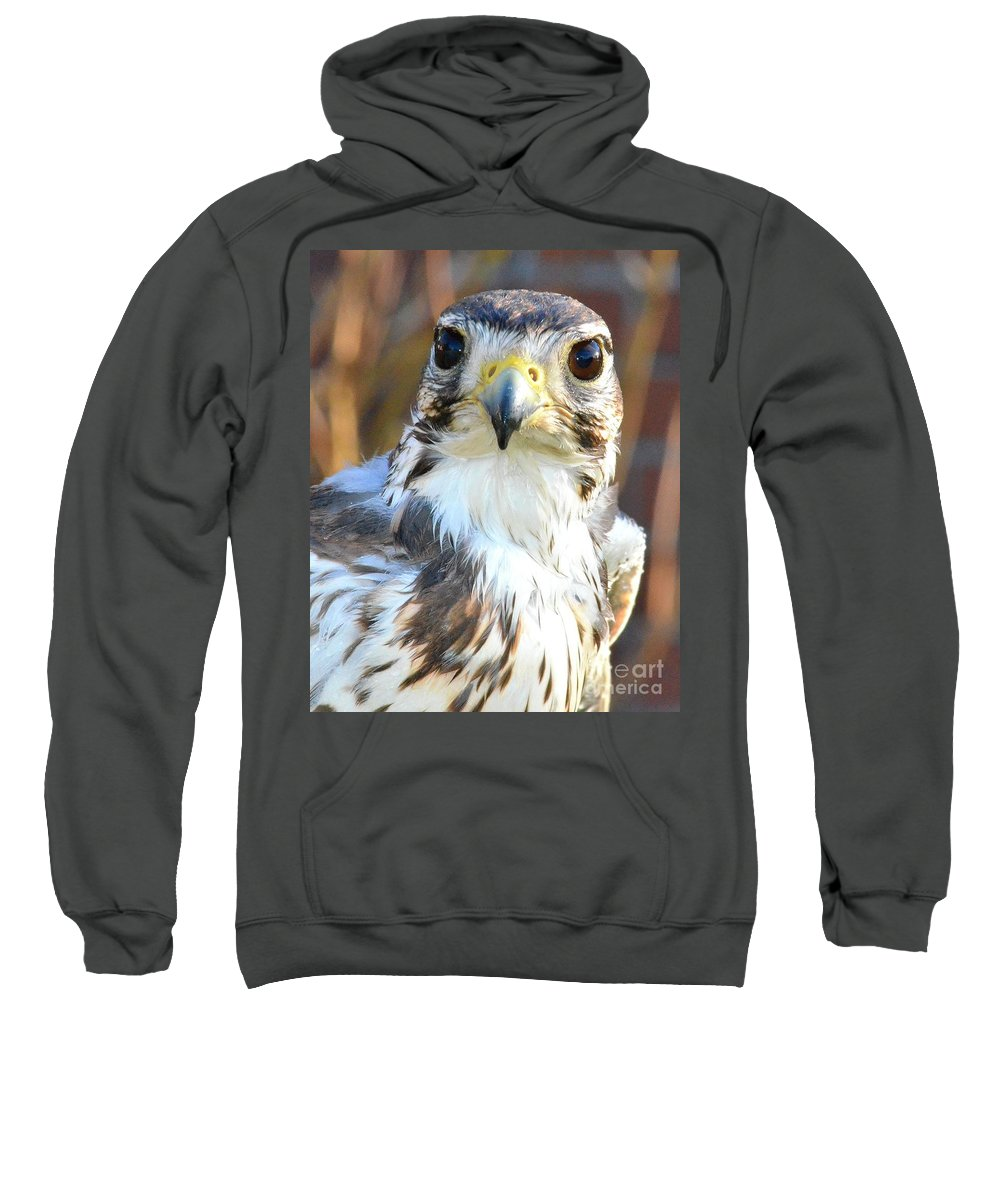 Hawk Sweatshirt featuring the photograph Hawk Eyes by Tara Ellis