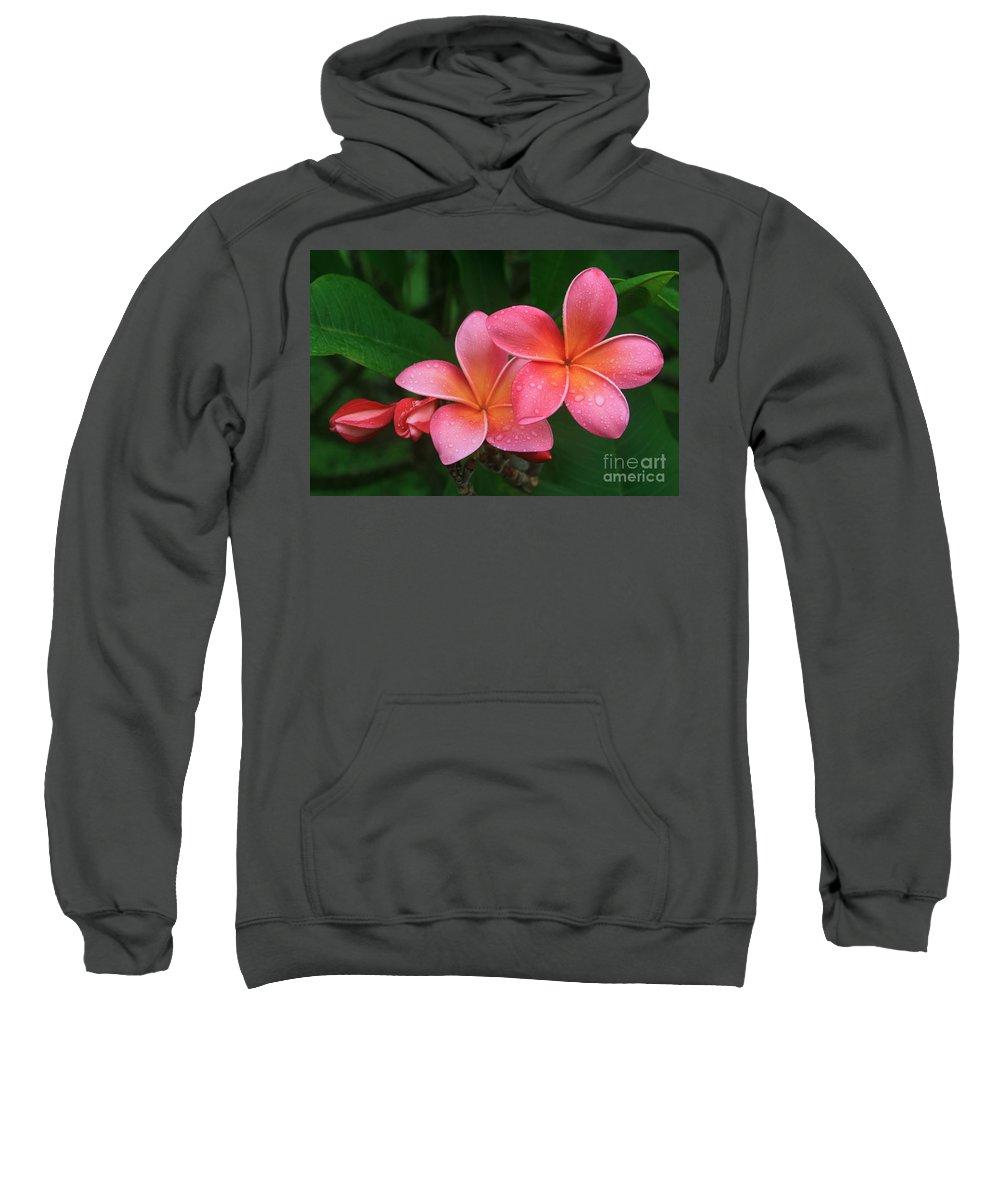 Pink Plumeria Sweatshirt featuring the photograph He Pua Laha Ole Hau Oli Hau Oli Oli Pua Melia Hae Maui Hawaii Tropical Plumeria by Sharon Mau