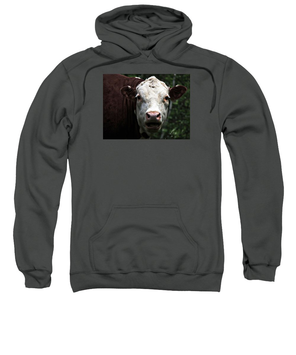 Animal Sweatshirt featuring the photograph Help Me by Marcia Lee Jones