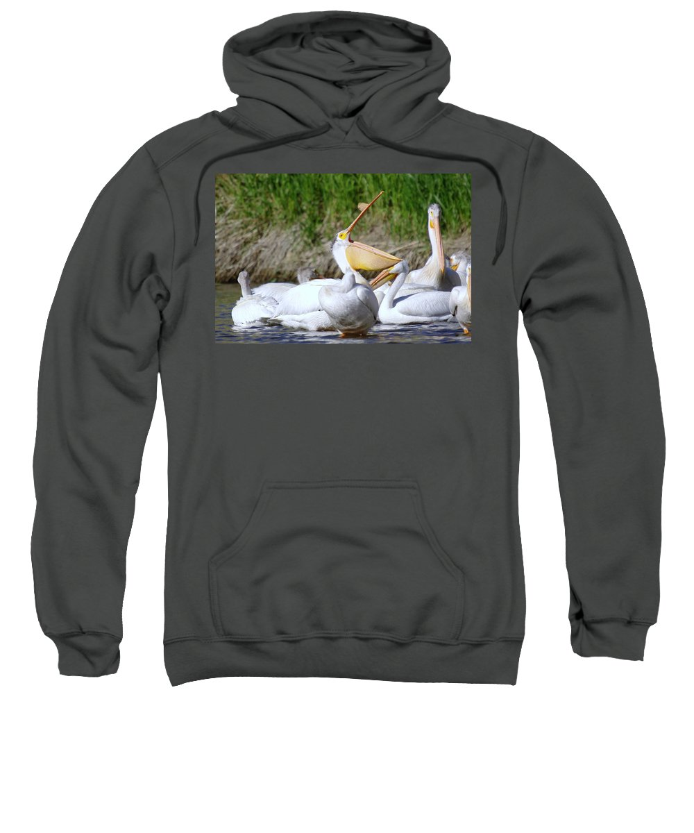 Pelicans Sweatshirt featuring the photograph Here Fishy Fishy Fishy by Jeff Swan