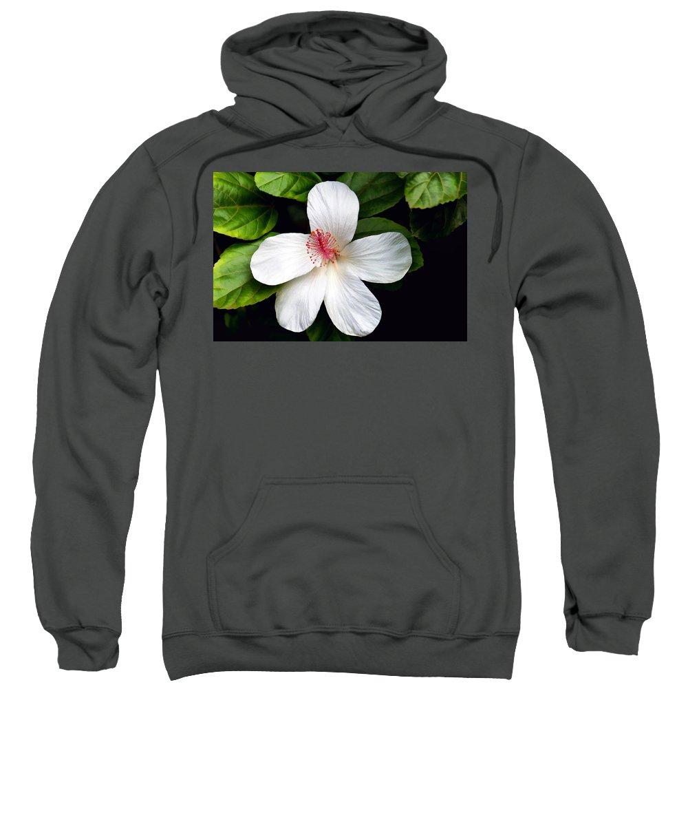Flower Sweatshirt featuring the photograph Hibiscus 54 by Dawn Eshelman