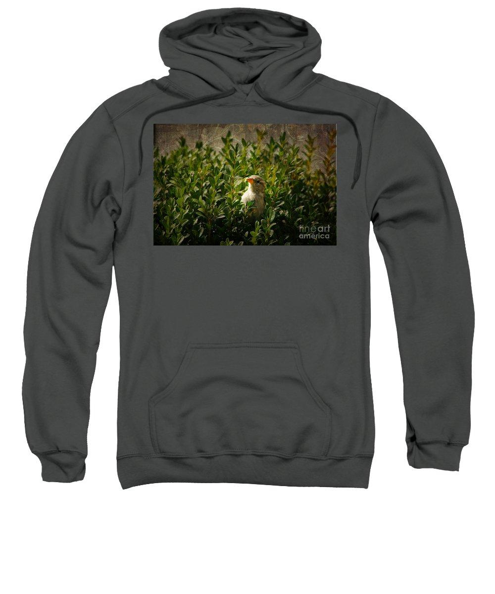 Hide And Seek Sweatshirt featuring the photograph Hide And Seek by Mariola Bitner