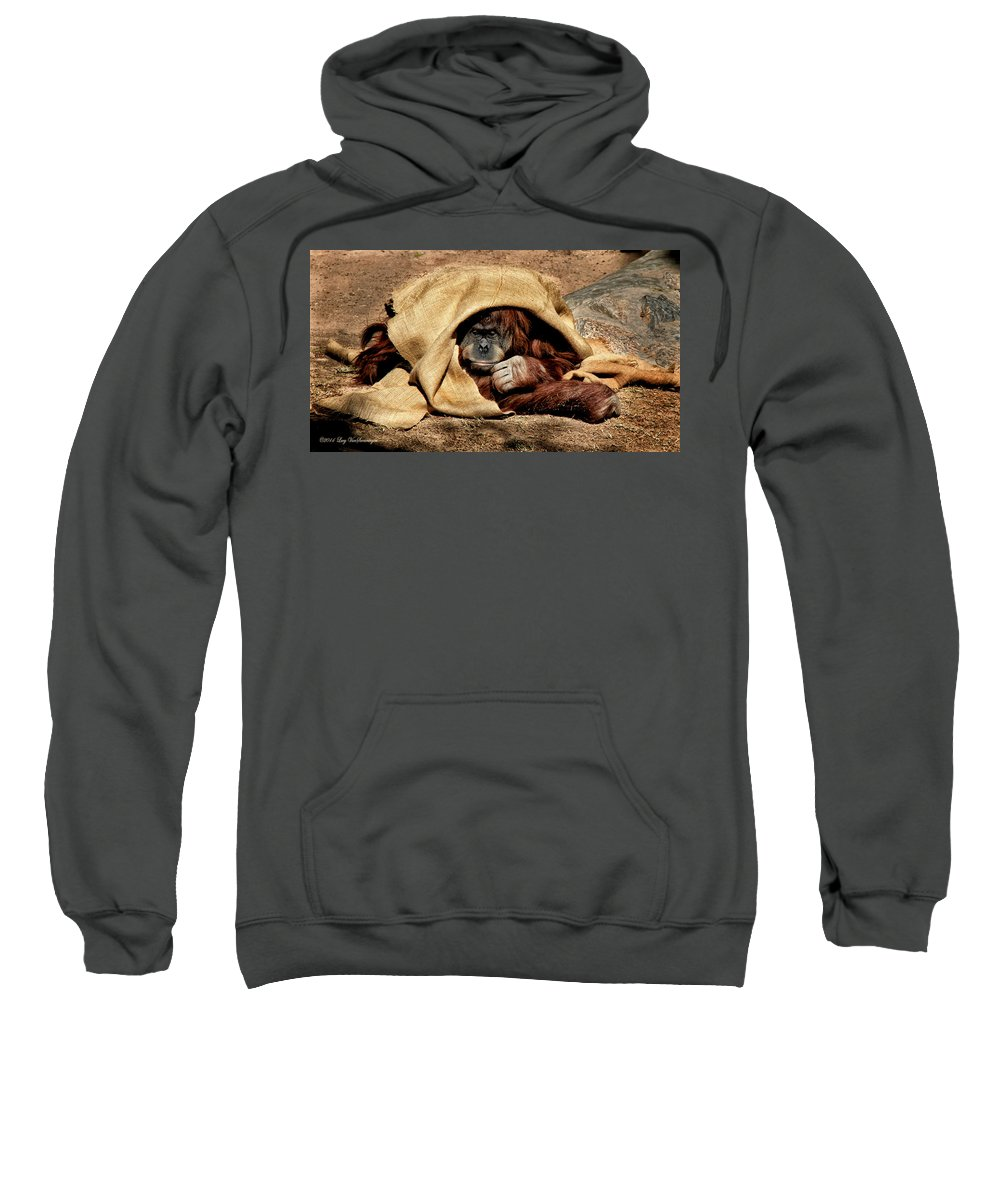 Orangutan Sweatshirt featuring the photograph Hiding In Plain Sight by Lucy VanSwearingen