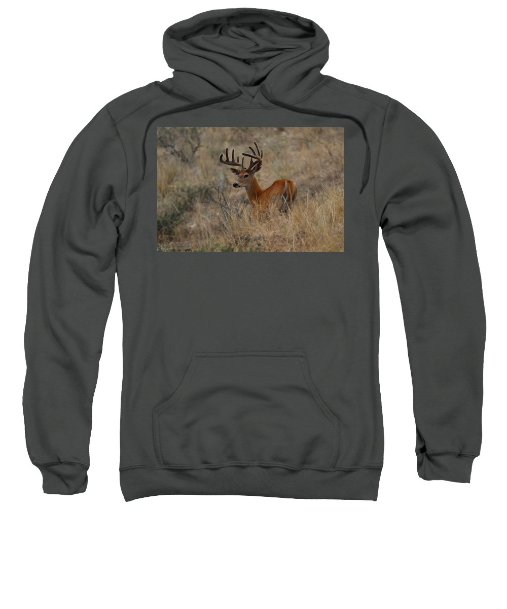 White Tailed Buck Sweatshirt featuring the photograph Hillside Giant by Steve McKinzie
