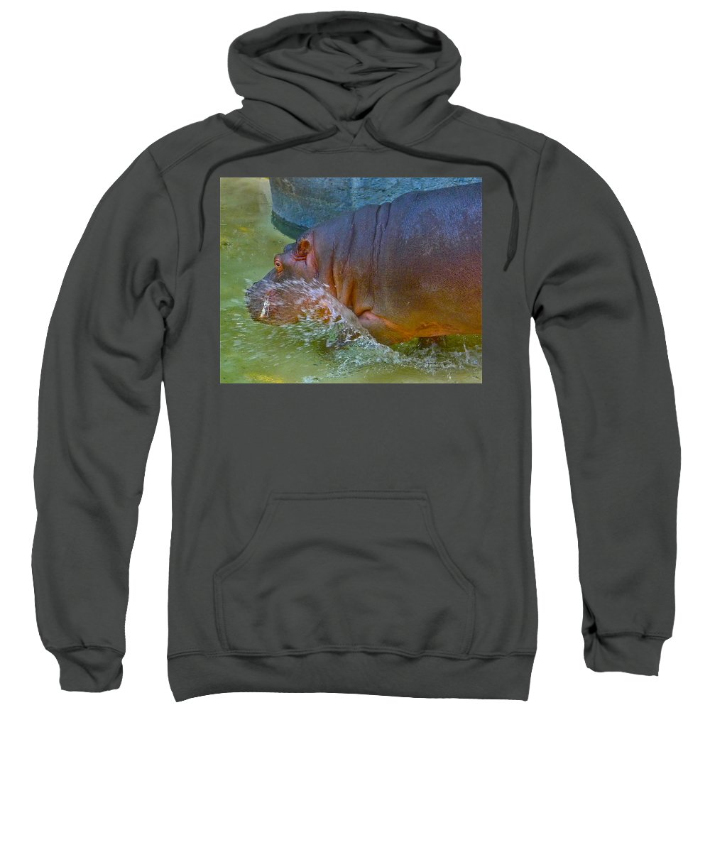 Hippopotamus Sweatshirt featuring the photograph Hippo Taking A Plunge by Denise Mazzocco