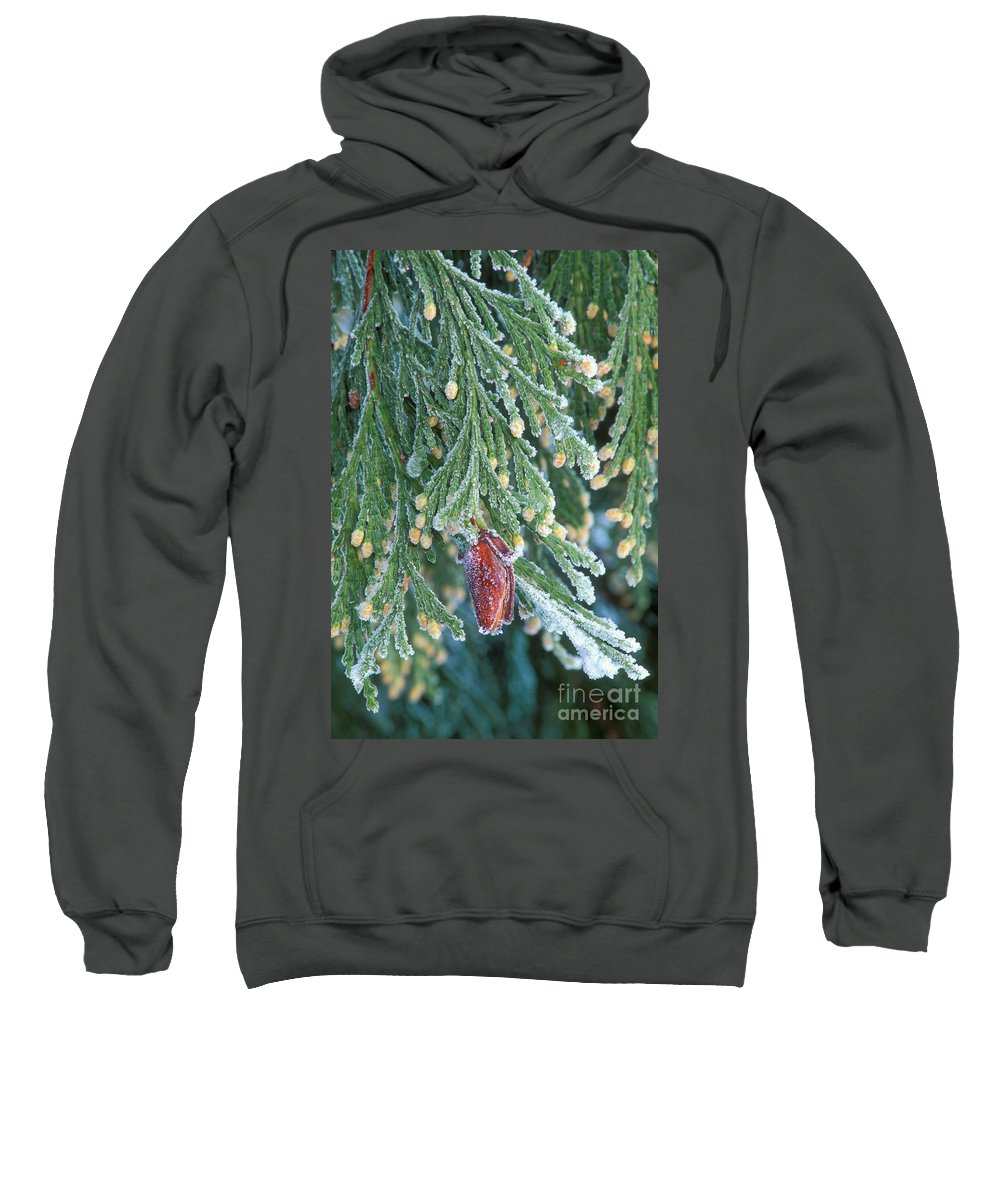 North America Sweatshirt featuring the photograph Hoarfrost On Pine Bough Yosemite National Park by Dave Welling