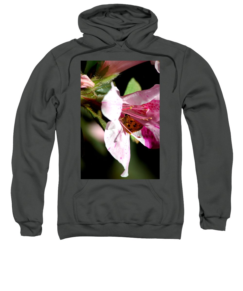 Butterfly Sweatshirt featuring the photograph Home Sweet Home 2 by David Weeks