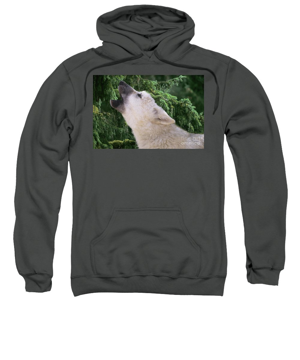 Arctic Wolf Sweatshirt featuring the photograph Howlling Arctic Wolf Pup Endangered Species Wildlife Rescue by Dave Welling