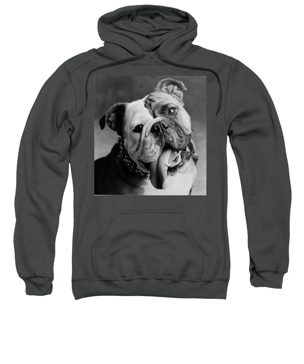 Bull Dog Sweatshirt featuring the photograph Huh by Jill Reger