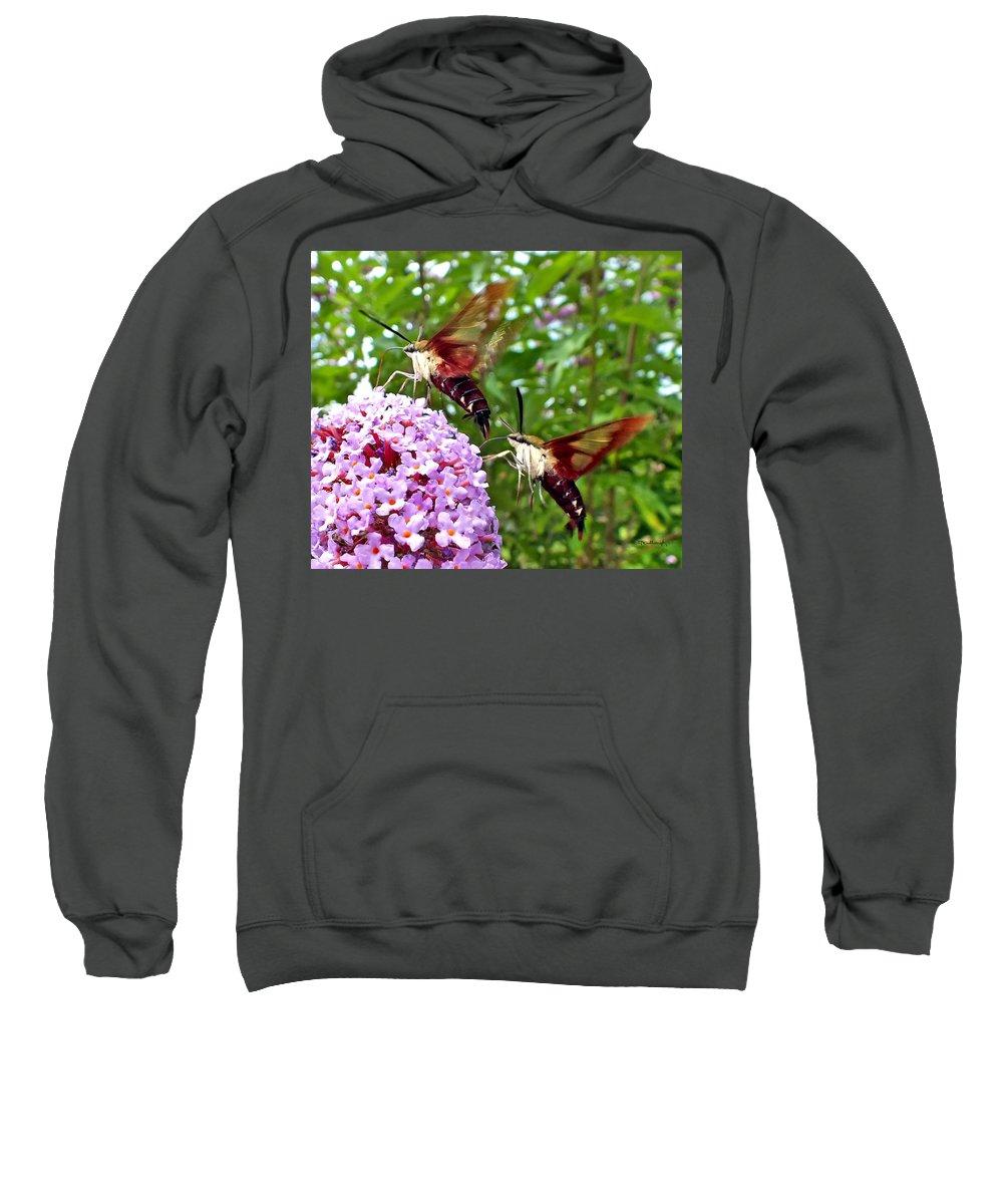 Duane Mccullough Sweatshirt featuring the photograph Hummingbird Moths by Duane McCullough