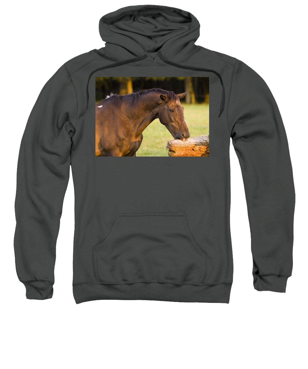 Pony Sweatshirt featuring the photograph Hungry by Angel Ciesniarska
