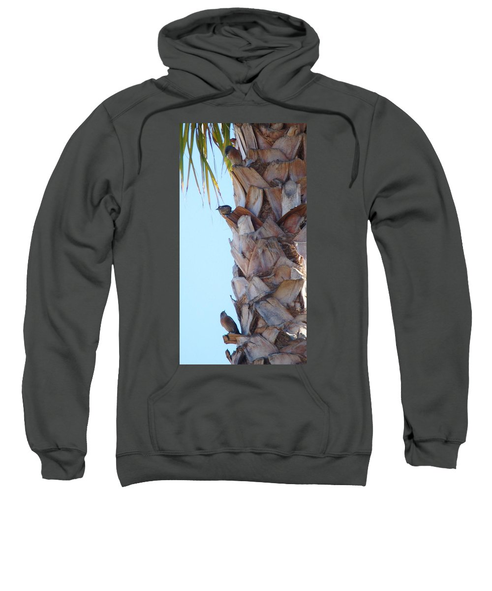 Linda Brody Sweatshirt featuring the photograph I See You Two Above Me by Linda Brody