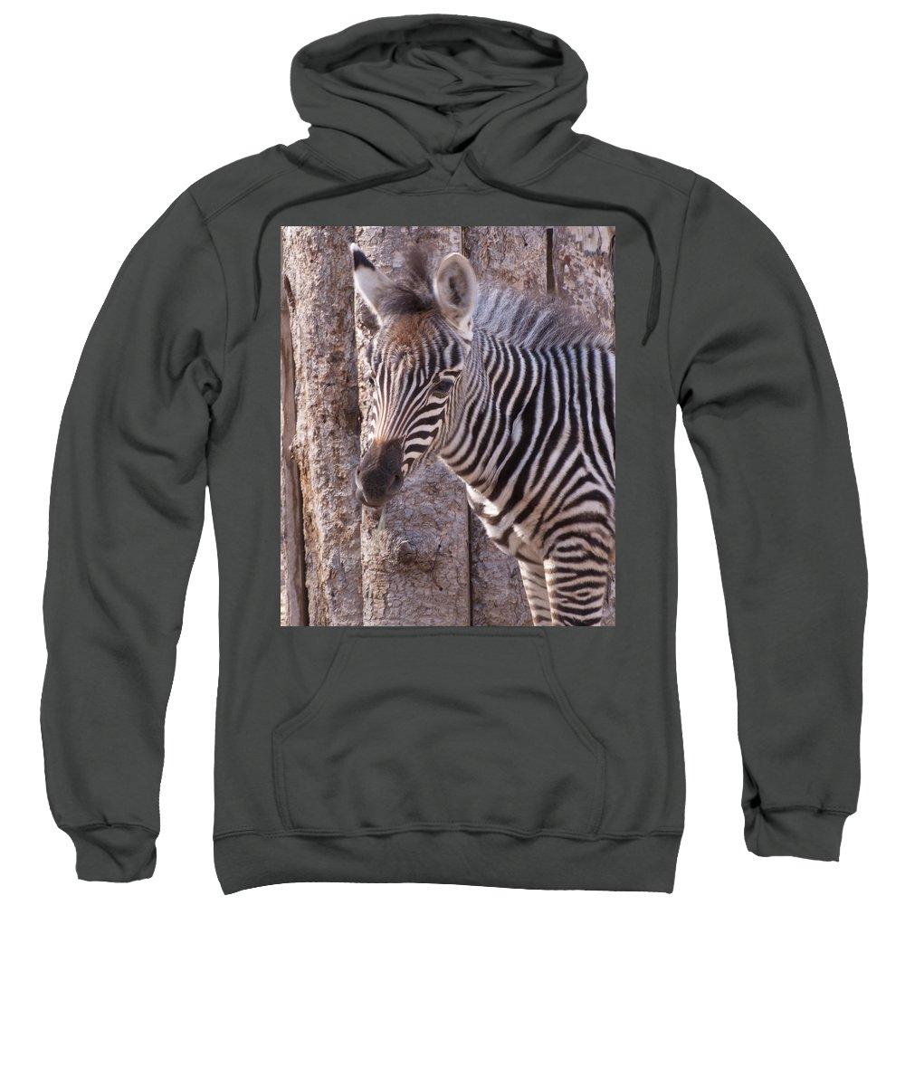 Idaho Falls Sweatshirt featuring the photograph Idaho Falls - Tautphaus Park Zoo by Image Takers Photography LLC