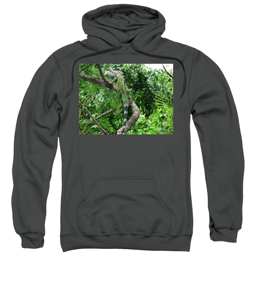 Iguana Sweatshirt featuring the photograph Iguana In A Tree by DejaVu Designs
