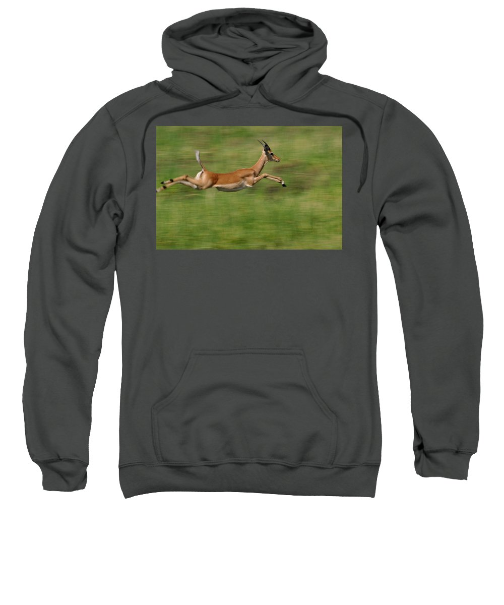 Aepyceros Melampus Sweatshirt featuring the photograph Impala Running And Leaping by Pete Oxford