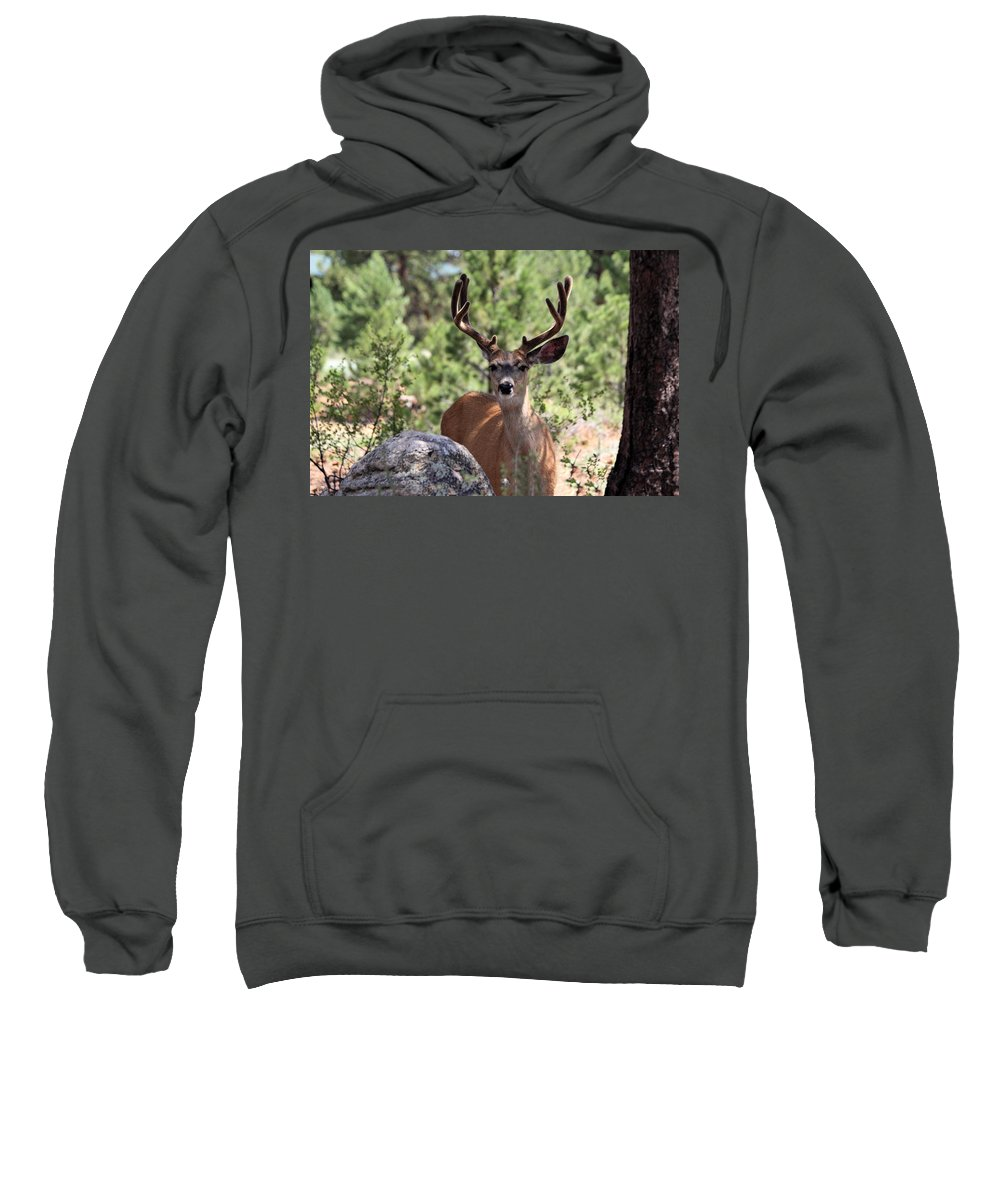 Mule Deer Sweatshirt featuring the photograph In The Shade by Shane Bechler