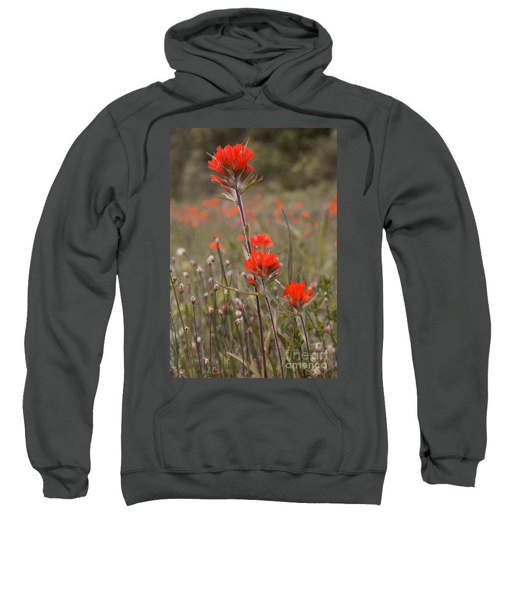 Garden Sweatshirt featuring the photograph Indian Paintbrush by Barbara McMahon