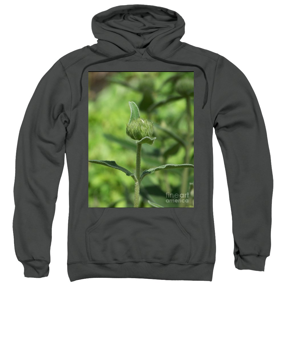 Plants Sweatshirt featuring the photograph Its A Green World by Kathy McClure