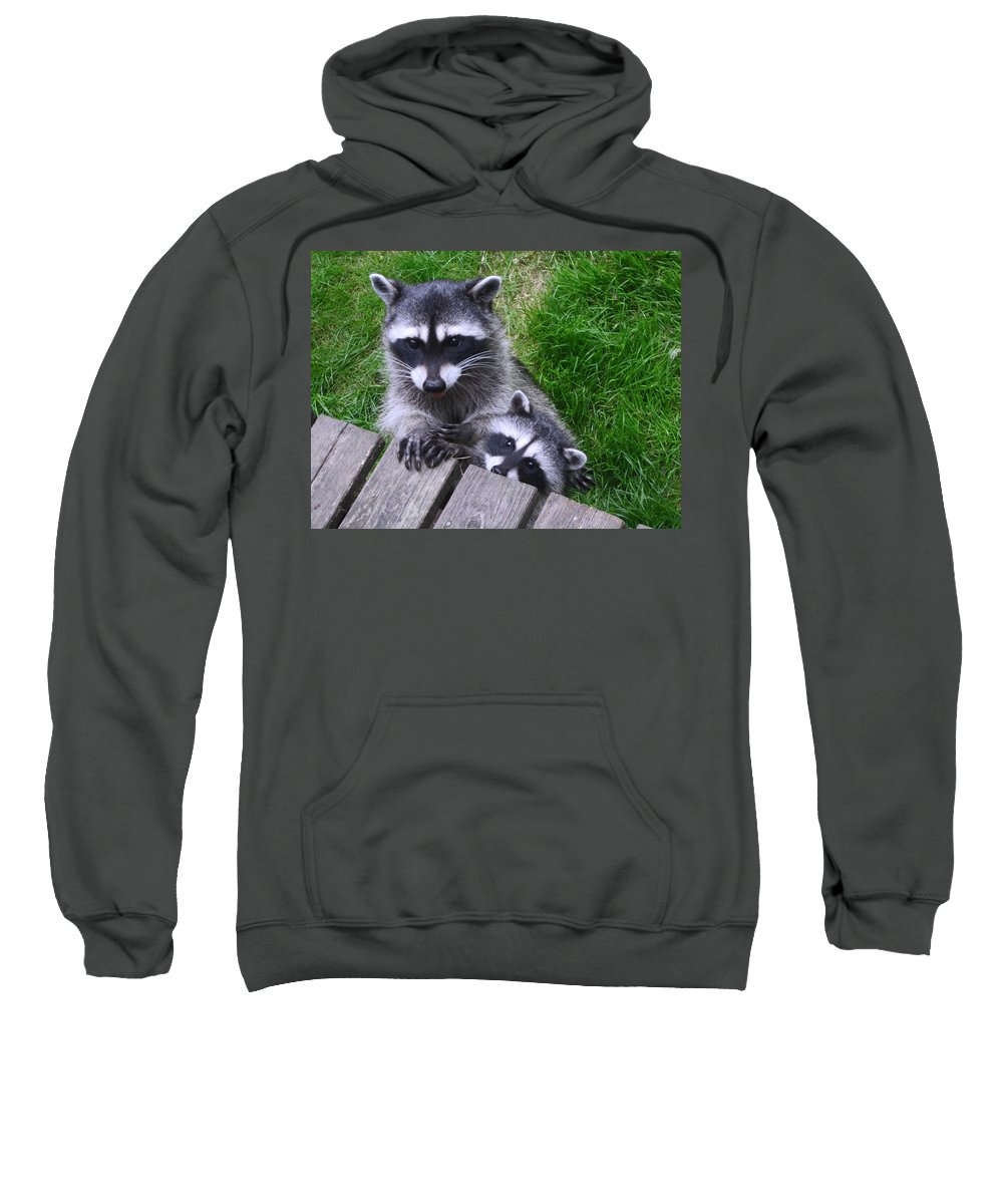 Animal Sweatshirt featuring the photograph It's Nice To Meet You by Kym Backland