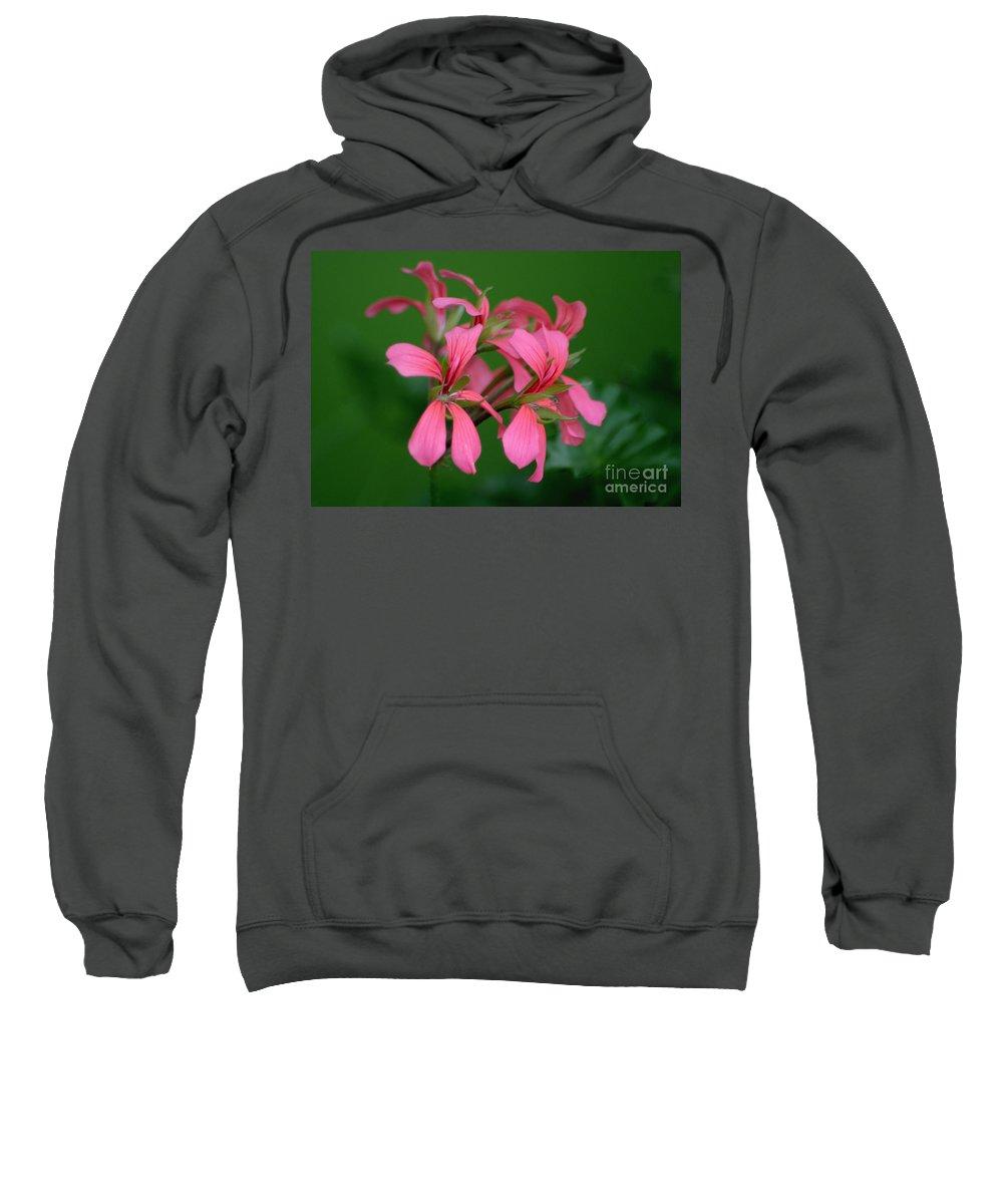 Ivy Geraniums Sweatshirt featuring the photograph Ivy Geraniums by Living Color Photography Lorraine Lynch