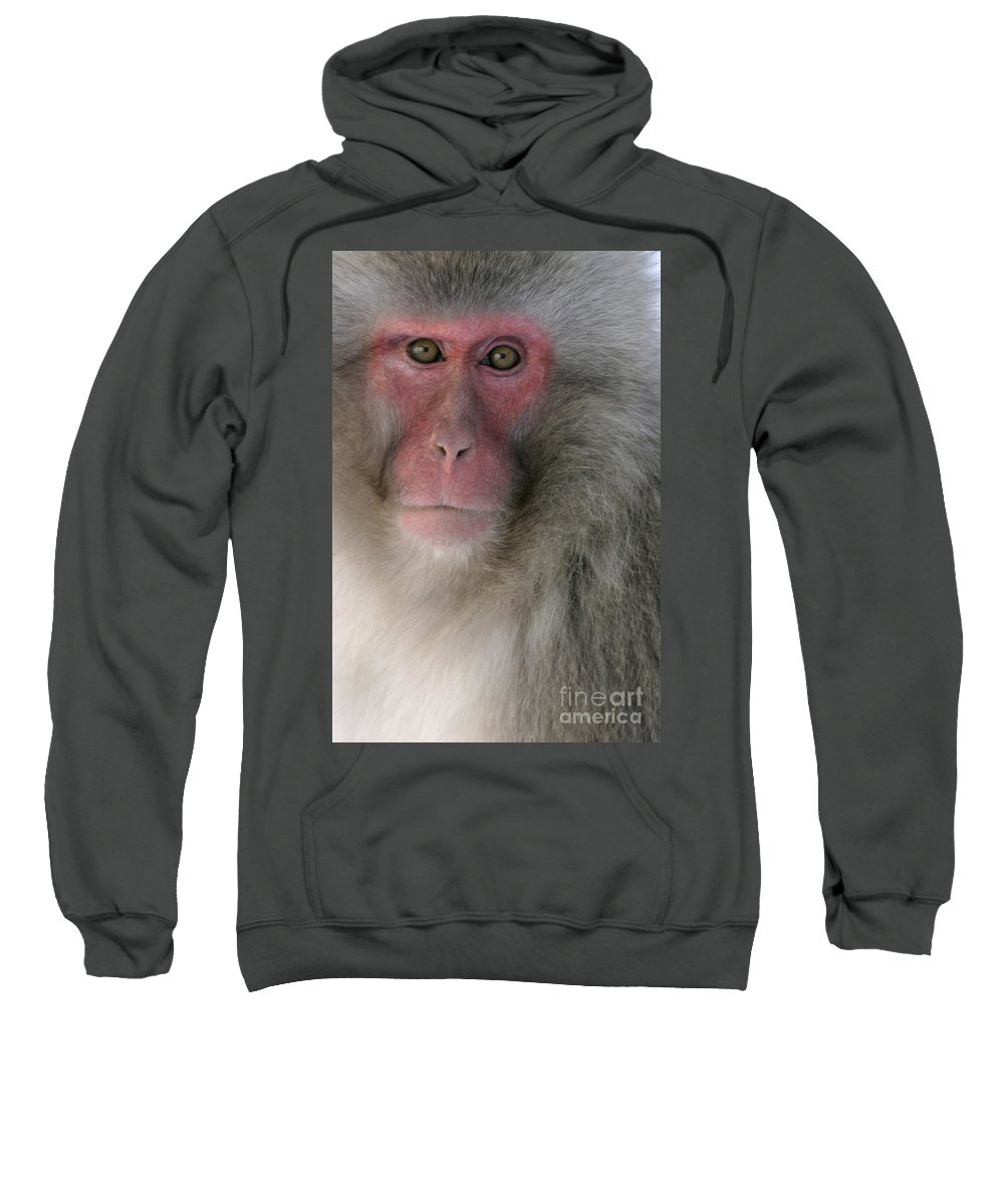 Japanese Macaque Sweatshirt featuring the photograph Japanese Macaque by Jean-Louis Klein and Marie-Luce Hubert