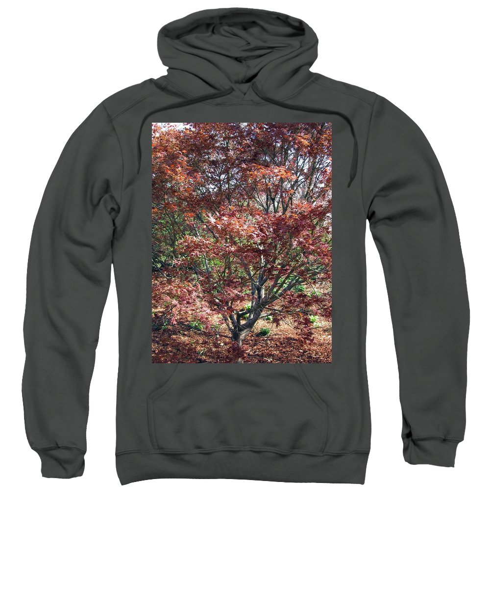 Japanese Maple Sweatshirt featuring the photograph Japanese Maple by Pamela Critchlow
